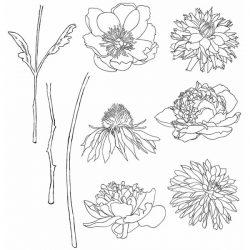 Tim Holtz Flower Garden Stamp Set